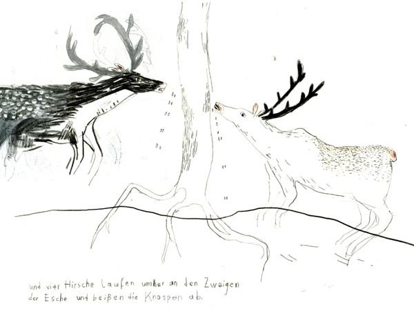 CarolineGaedechens-Deer