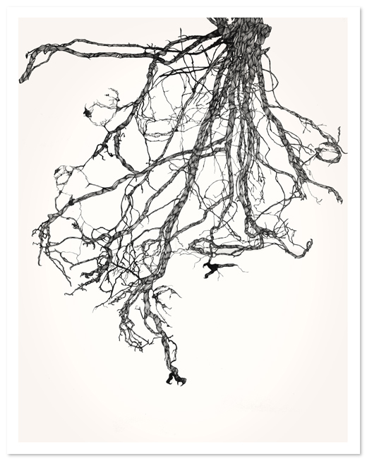 ClareScully-Bird-roots-1